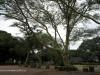 Durban - Japanese Gardens (6)