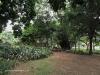 Durban - Japanese Gardens (7)