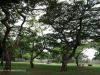 Durban - Japanese Gardens (8)