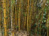 Durban - Japanese Gardens bamboo grove (2)