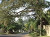 Durban North - Buttery Road (1)