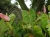durban-st-thomas-ridge-road-flowers-and-iron-mongery-8