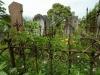 durban-st-thomas-ridge-road-general-grave-scenes-5