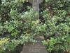St Thomas Cemetery - Grave -  Brigadier General James Scott Wylie 1937
