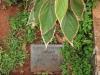 St Thomas Cemetery - Grave -  Hubert Edmonds