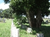 redhill-cemetery-chinese-merchant-navy-graves-wwii-1