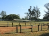 Durban - Kings Park Stables (9)