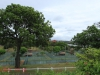 Westridge Park Tennis - Tennis Courts (4)