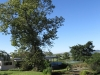 Umlaas - Eden Lassie gardens and dam (11)
