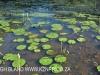 Umlaas - Eden Lassie gardens and dam (2)