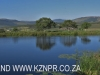 Umlaas - Eden Lassie gardens and dam (5)