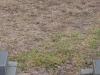 Elandheim Cemetery grave of  Wellmann & Bruller