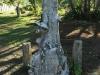 Empangeni Cemetery -  Harold Payne - 1917 - (21)