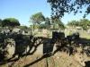 Empangeni Cemetery - graveyard views (3)