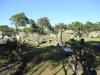 Empangeni Cemetery - graveyard views (4)