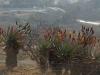 estcourt-fort-durnford-outlook-s29-00-964-e-29-53-301-elev-1170m-53