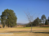 Estcourt-Golf-Club-greens-2
