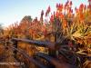 Klipfontein Farm Aloes (1)
