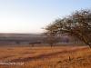 Klipfontein Treess (1)