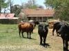 Loskop Mein Heim - Lissadell Farms - A & B Arde (4)