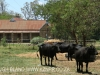 Loskop Mein Heim - Lissadell Farms - A & B Arde (7)