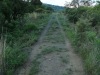 Slivyre Game Farm  Cabbage Express old tracks (9)