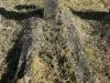 Lions Bush Farm Cemetery grave Jock McKenzie drowned Elandspruit TVL 4 Jan 1894. (2)