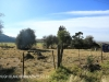Lions Bush barn and stone pens (8)