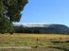 Lions Bush pastures (1)