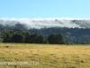 Lions Bush pastures (3)