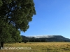 Lions Bush pastures (4)