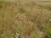 fort-menne-umvoti-laager-s29-08-833-e30-36-916-elev-983m-1