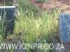 Geluksburg Cemetery Graves -  JA Greeff