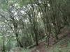 giants-castle-bushman-paintings-forest
