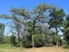 Wasbank - Manor House - De Jager - Gardens - 28.15.34 S  30.6.55 E-  (1)