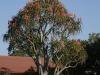 glencoe-flowering-baines-s28-10-230-e30-09-1