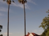 glencoe-pink-palm-tree-house-no-29-s28-10-085-e30-08-755-elev-1356m