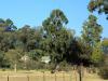 Greystone-Farm-Main-gate-and-driveway-1