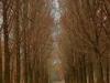 Holme Lacy driveway in memory of Milner Slatter 1945  ( (3)