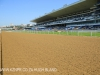 Greyville Race course (3)