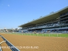 Greyville Race course (4)