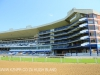 Greyville Race course (5)