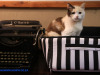 Hilldrop-cat