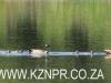 Himeville - Lake Kenmo (36)