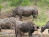 Hluhluwe - Buffalo & white rhino wallow