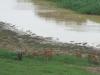 Hluhluwe - Hluhluwe dam & picnic site (3)