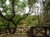 Hluhluwe - Munywaneni Bush Lodge - viwing deck over river (1)