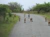 Hluhluwe - Wild Dog pack (1)