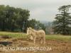 Howick Fairfell Farm - paddocks (5)