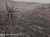 Howick - Umgeni valley (1)